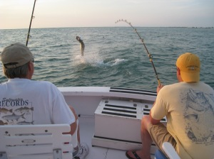 Tarpon Fishing 009